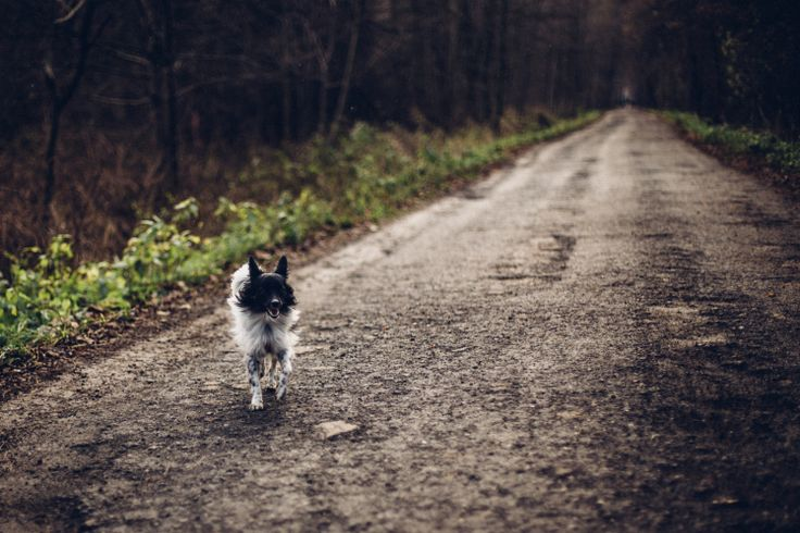 Running dog in the forest
