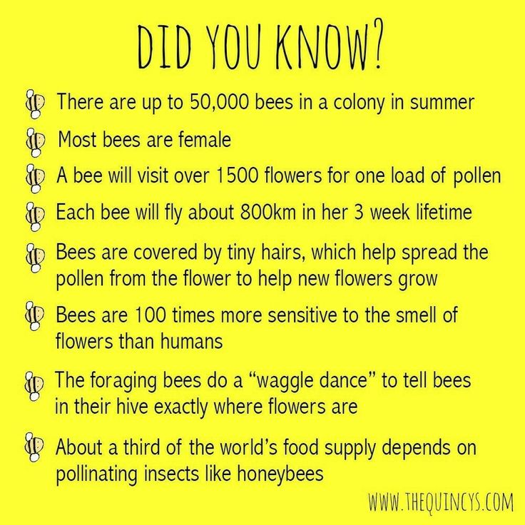information about apiculture Learn about apiculture - care and management of honey bees definition of apiary, the products acquired through beekeeping.