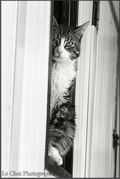 37 best images about les chats la fen tre on pinterest for Assis a la fenetre