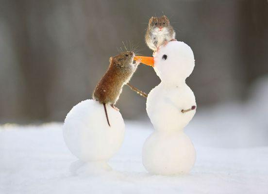 Фото: Забавные и милые животные заряжают позитивом
