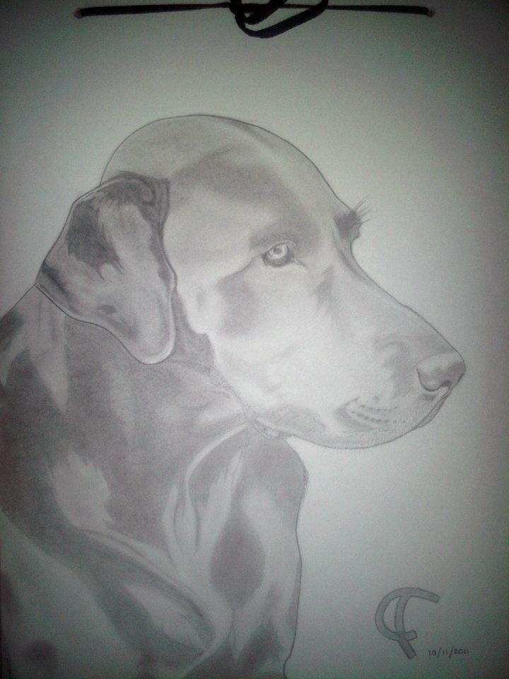 perro labrador negro dibujado a lapiz