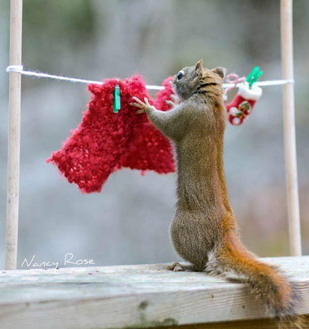 La photographe canadienne Nancy Rose ayant remarqué que les écureuils au fond de son jardin étaient particulièrement peu farouches, elle a décidé de crée