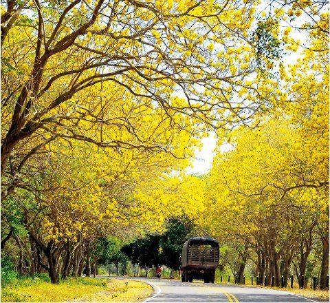 Viaja con #Easyfly a #Barranquilla #DestinoFavorito de #Colombia más en http://www.easyfly.com.co/Vuelos/Tiquetes/vuelos-desde-barranquilla