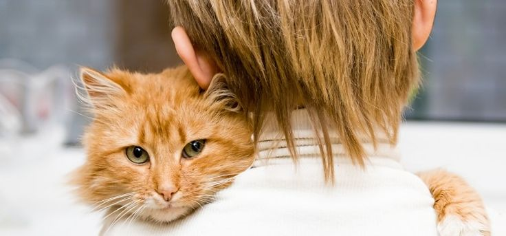 Conversar com o seu gatinho faz bem para a saúde dele   Fareja Pet