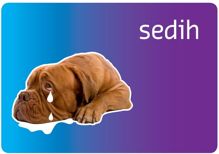 Helps a child to cope with life's ups and downs. What can I do when I feel sad? ('sedih' in bahasa Indonesia). #education #specialschool #specialneeds #asylumcentre #refugeecamp #emotions #children