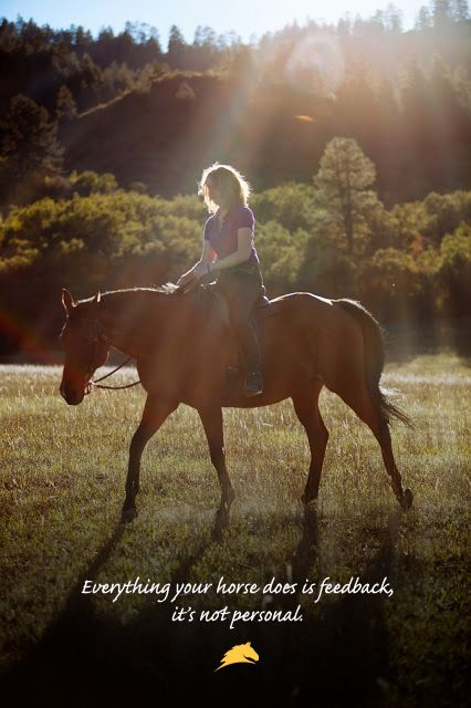 Everything your horse does is feedback, it's not personal.