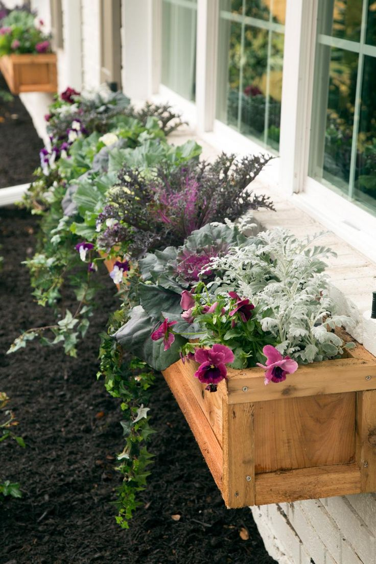 Fall is the time to fill window boxes and gardens with showy white, purple or fuchsia ornamental cabbages, pansies and English ivy to add a cheery pop of color that will endure winter's frosty temps and beautify your landscape into the early spring.
