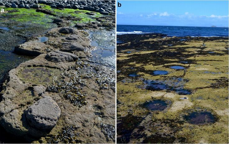 Millions of years ago, on what is now a windswept corner of the northern Scottish island of Skye, some of the largest animals to have walked the Earth once plodded through a shallow coastal lagoon Researchers have found the criss-cross of footprints left behind by sauropods, making the island the largest dinosaur site in Scotland.