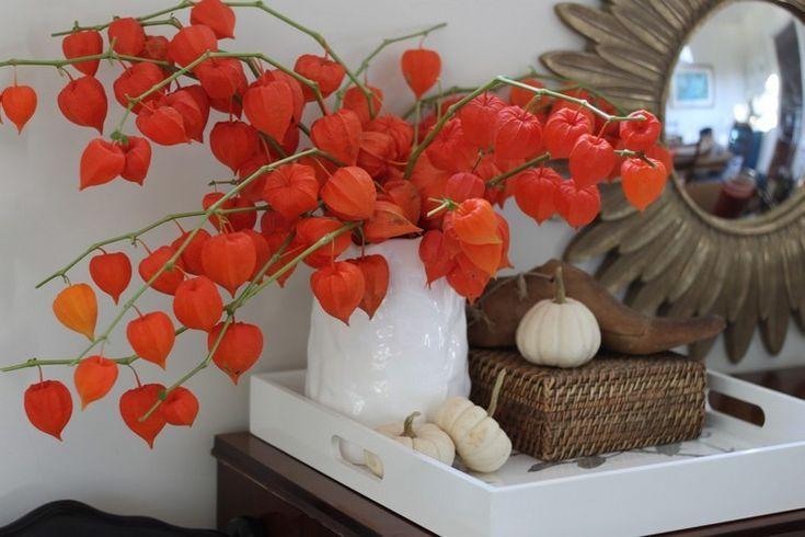 arrangement de branchettes de physalis alkekengi dans un vase en porcelaine blanc