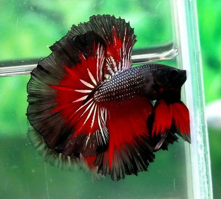 Les 107 meilleures images du tableau pretty fish sur for 94 1 the fish