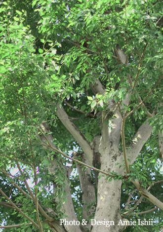 幸せスタイル-シンボルツリー