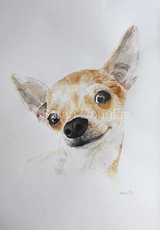 Chihuahua dog pet portrait in watercolour by Sarah DOuglas