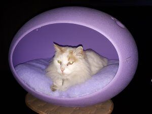 Cat Beds In Pretoria