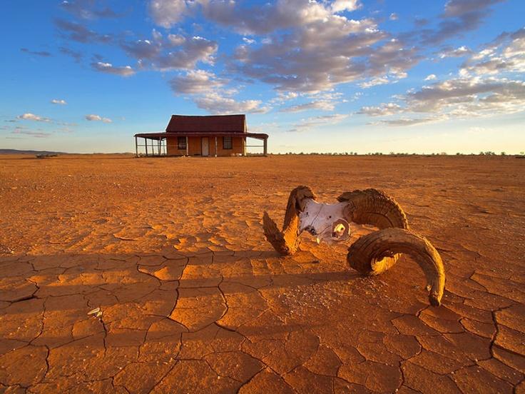 A ram's skull on the cracked claypan of the Mundi-Mundi plains. Silverton, New South Wales.