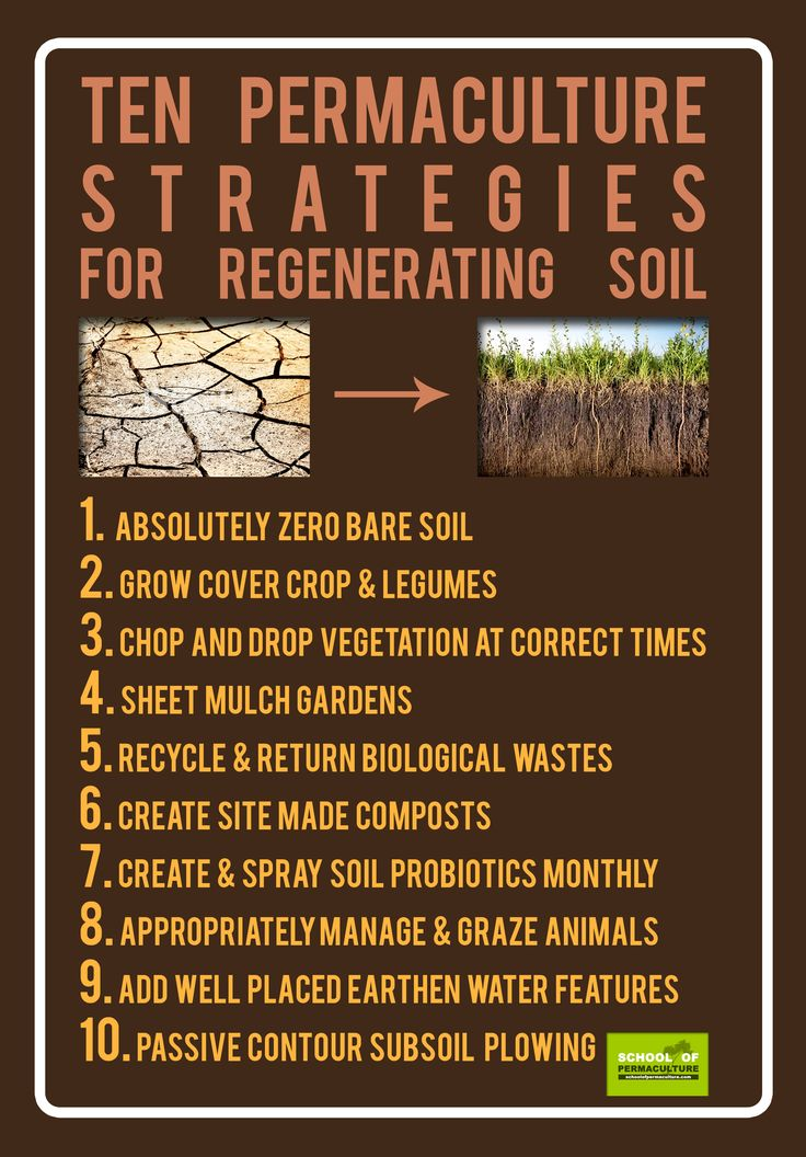 Ten Permaculture strategies for regenerating soil