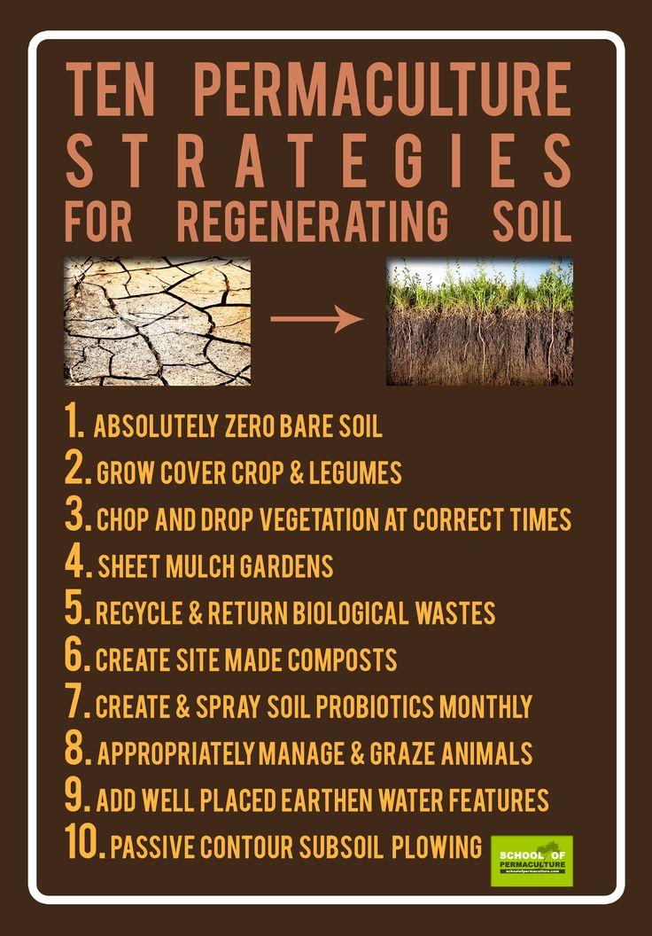 Ten Permaculture strategies for regenerating soil