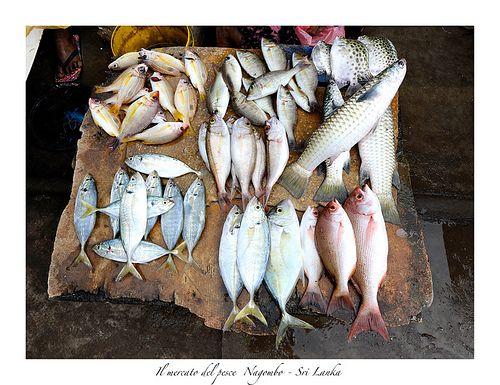 Fish market, Negombo, Sri Lanka (www.secretlanka.com)