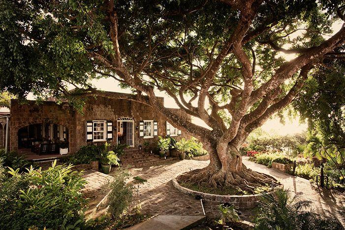 Aujourd'hui incarnation du chic et du luxe décontractés, Montpelier est une ancienne plantation de sucre vieille de 300 ans. Les chambres disposent toutes d'une vue spectaculaire sur la mer, et la plage privée de hamacs, cabanes et bar de plage. Au bord de la piscine, le « restaurant Indigo » incite à se mettre au rythme de l'île, tandis que le « restaurant 750 » permet de dîner en admirant la vue sur St Kitts. « Le Mill Privée » propose quant à lui une expérience inédite, confrontant le ...