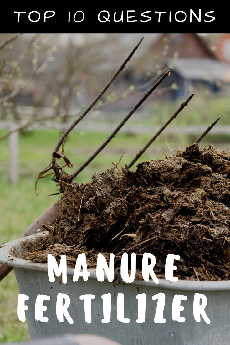 3ef74713c3bbc1123fcda9e97300aad6 - What's The Best Manure For Vegetable Gardens