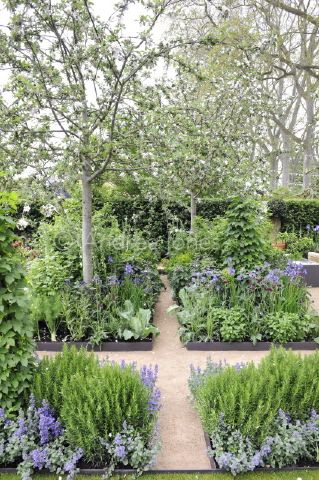"Steel edging in a grid pattern & beautiful planting (the tree is Pyrus communis ""Conference"") - The Homebase Garden 'Sowing the Seeds of Change', a Chelsea gold medal garden designed by Adam Frost"