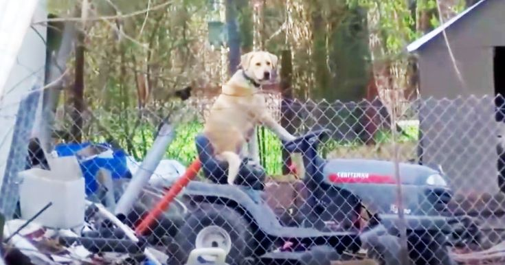 This news crew was filming after a devastating tornado when something kind of crazy caught their eye. When the camera focused and I saw a dog sitting on lawn mower I just had to laugh. Oh my gracious this is something I never expected to see. Who else is cracking up!