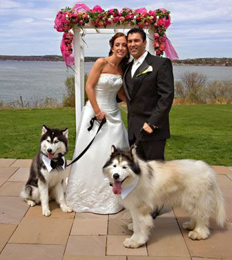 Huskies!!!  Could be Maverick & Charlie!!!: Photos, Ideas, Bows Ties, New Trends, Weddings, Pet, Dogs Wedding, Dogs In Wedding, Wedding Dogs