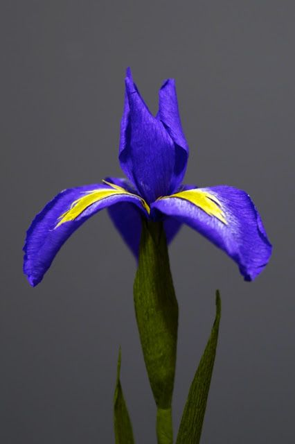 Crepe paper iris, handcrafted by Papetal