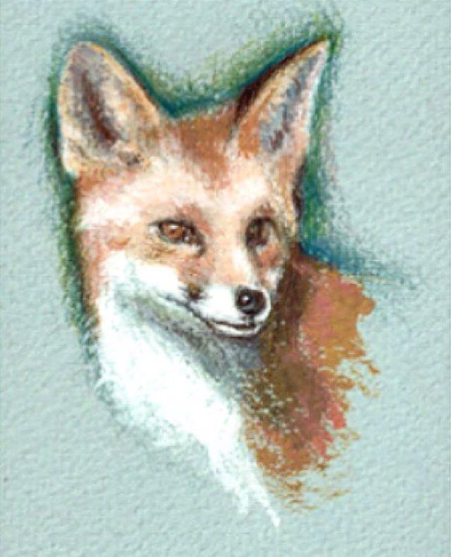 Fantastic #Foxes ✨✨ #BillSkinner #illustration #sketches #RedFox