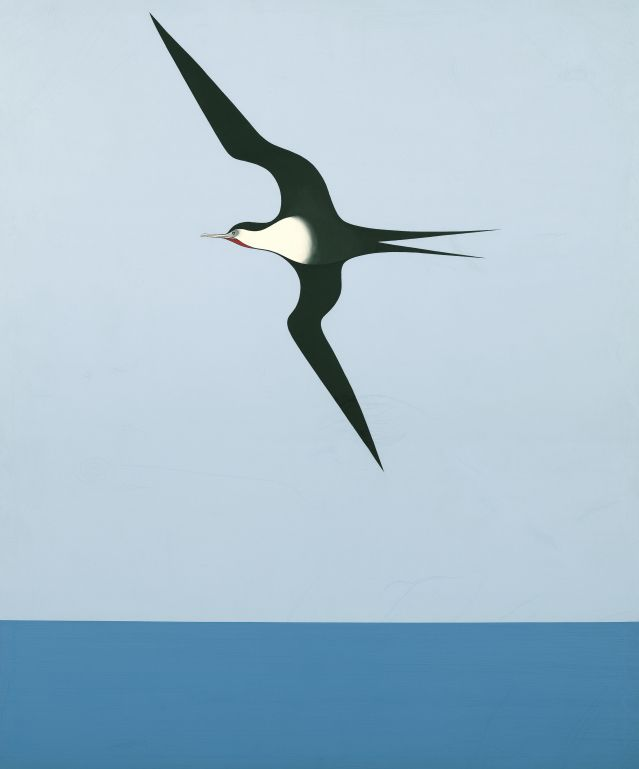 Object: Pacific frigate bird I   Collections Online - Museum of New Zealand Te Papa Tongarewa