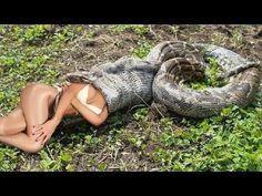 Biggest python snake Giant anaconda on human