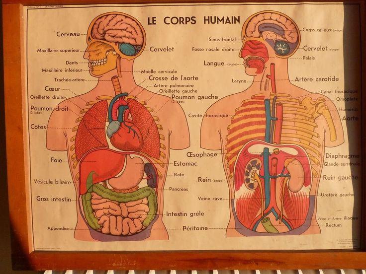 Ancienne affiche scolaire anatomie corps humain loft art for Interieur du corps humain image