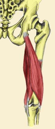 Got Sit Bone Pain? - What to do with that hamstring © 2010