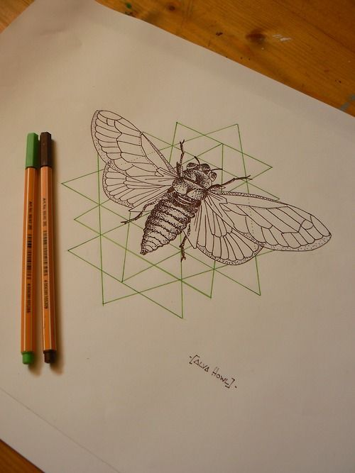 Alva Howl cicada illustration