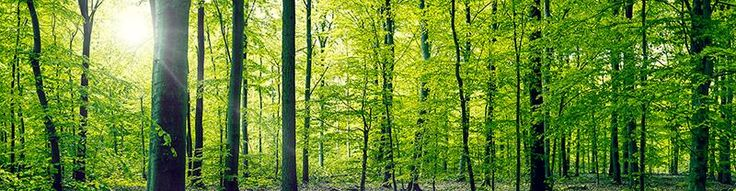 "Kasper Nymann on Twitter: ""Panorama photo of a forest in the spring. http://t.co/VhfGJvJLc9 #forest #panorama #photography #nature #photographer http://t.co/Sej9Z2Qqin"""