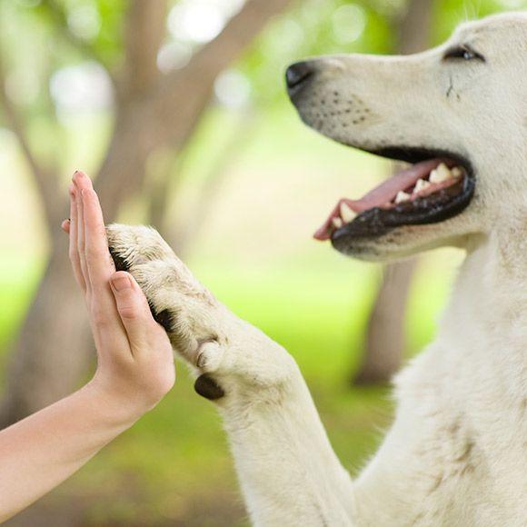 Djur gör oss glada! Är det någon gång vi verkligen är i nuet så är det väl i djurs sällskap? Deras livsglädje och energi är lätt att identifiera sig med och deras påhitt lockar ofta fram glada skratt.