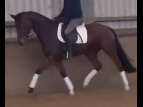 www.sporthorses-online.com 2011 Hanoverian mare by Fürst Romancier for s...
