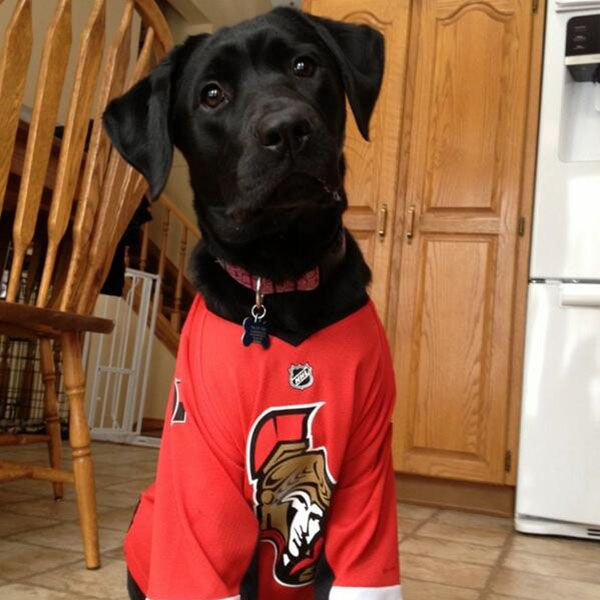 "After a trade to the Ottawa Senators, Matt Kassian @kassassination tweeted this:  ""Sheebles loves her new jersey... #sens"""