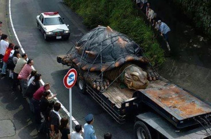Social media message claims that an attached photograph depicts the world's largest tortoise being transported along a roadway strapped to a truck. #hoax