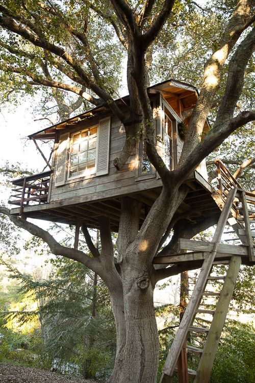 Treehauslove: San Francisco Treehouse. A treehouse build 7.6...