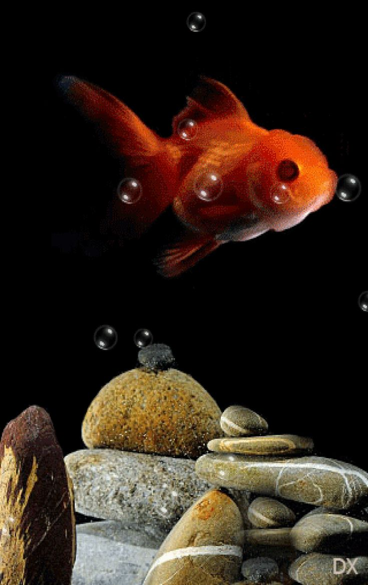 Гифы золотые рыбки, любимой сестре