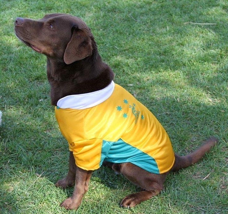 Wallabies dog jersey
