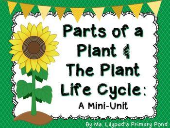Activities, Kindergarten and Plants on Pinterest