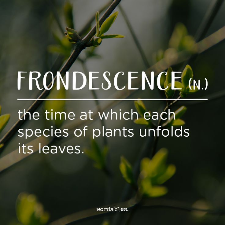 A word more often found on the pages of plant biology journals than heard in bars, frondescence can be used to mark the period of time that a certain species opens its leaves to the sun but can also mean simply, foliage.