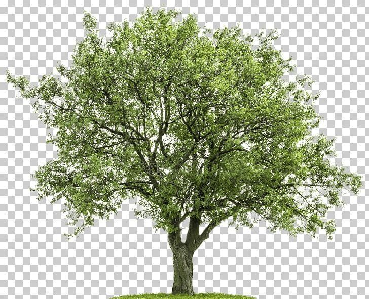 Tree Png Africa Tree Branch Clip Art Desktop Wallpaper Download Modern Design Photoshop Nature Africa Trees Cartoon Trees Free for commercial use no attribution required high quality images. tree png africa tree branch clip
