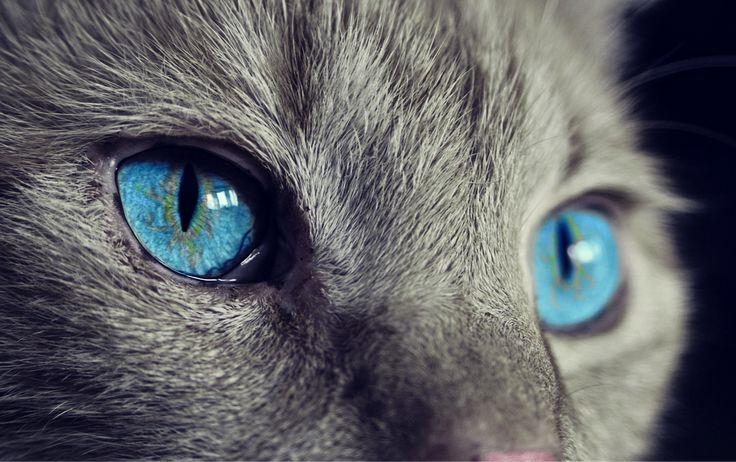 Cat, Des Animaux, Cat S Eyes, Yeux, Animaux, Vue