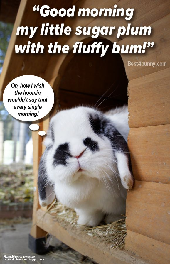 Most bunny parents will greet their bunnies in the morning by calling them by a funny nickname or even sing them a little song!