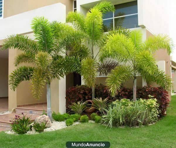 Recopilaci n de im genes de jardines peque os tan bonitos for Jardines pequenos verdes