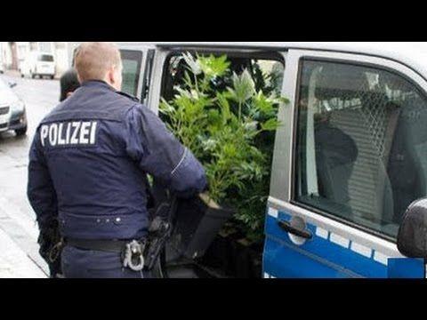 HIGH POLIZEI! Blau (b)raucht grün, Grenze(n)los dicht - Hanf in Sicht