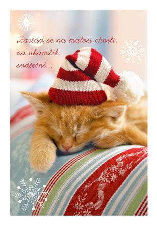 Kočička s čepicí - vánoční přání