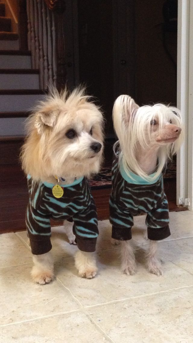 Chinese Crested Dog Clothes